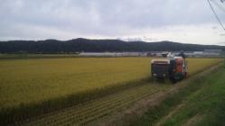 稲刈り2010-1