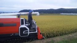 稲刈り2010-2