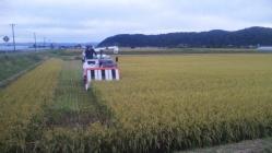 稲刈り2010-3