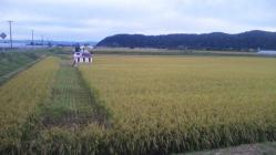 稲刈り2010-4