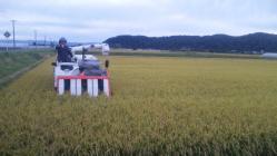 稲刈り2010-6