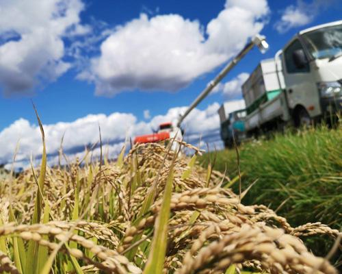 西間農園稲刈り